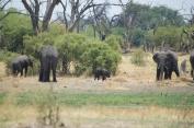 baby_elephant_alone
